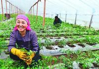 種植業什麼最賺錢?