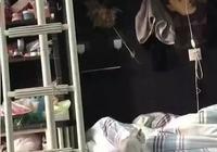 同學在寢室養了只貓!網友:看這貓咪上下鋪,我能笑一整天