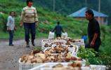豐都武平鎮已開始無人機種植馬鈴薯,各項先進技術使村民脫貧致富