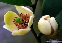 品詩詞:秦觀筆下的春景,人樹同瘦