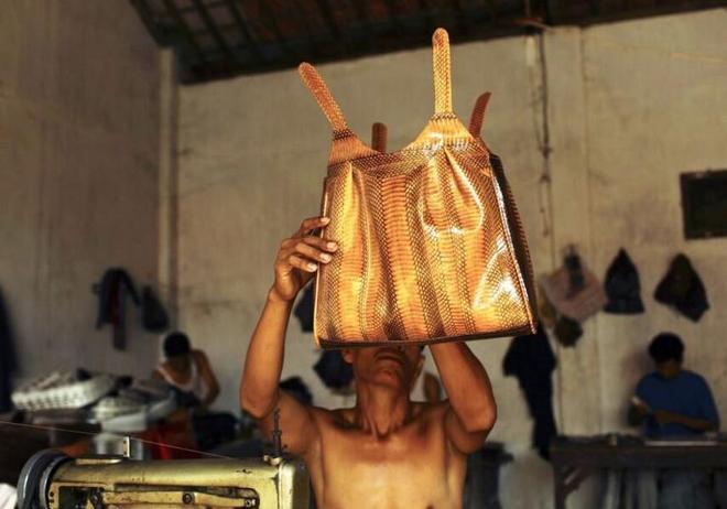 名貴蛇皮包的製作有多殘忍?看完這7張圖就明白了,觸目驚心