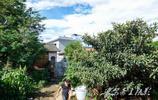 雲南小夥回家創業遇不順,家裡的四棵老棗樹卻在無意中幫了他一把