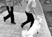 西安警方持續上門入戶查狗 寵物店將不再賣狗