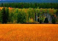 水隨天去秋無際·黃石國家公園和大提頓國家公園