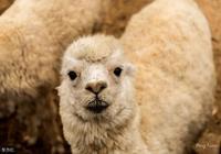 銀聯啊!國家隊啊!羊毛能從這裡薅到法國!你居然還只薅支付寶?
