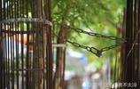 為何在海南什麼樹周圍加裝了鋼鐵柵欄,據說這樹值千萬,防止被盜