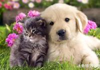看動物小時候的樣子,果然什麼東西都是小時候可愛,這誰頂的住啊