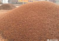 現在農村裡還有人種紅高粱嗎?紅高粱有什麼食用和藥用價值?