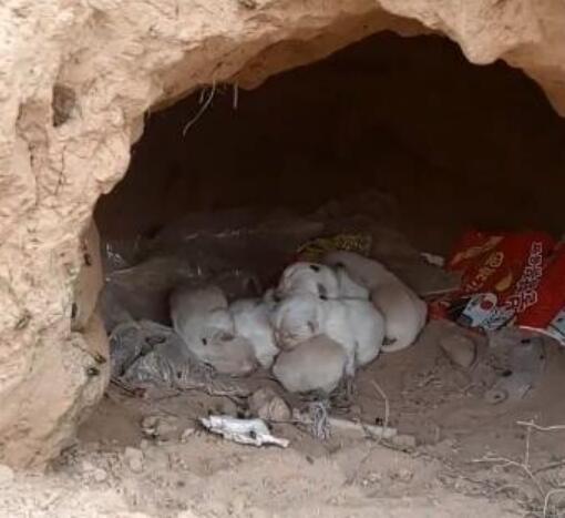 被丟棄在小洞裡的一窩小土狗, 爬滿蒼蠅, 還好有幾隻還活著