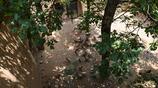 6畝果樹100只雞,66歲大叔1年掙3萬,為啥1天才做1頓飯,聽大叔咋說