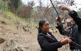 夫妻深山種豬苓養雞,種了4年豬苓賣了40萬,說山裡遍地是黃金