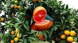 家裡有空地,一定要種上這6款果樹,一年四季不愁沒有水果吃
