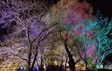 全球三大賞櫻勝地之一的黿頭渚夜櫻來了,美出新天際
