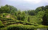 西鄉茶園影像志