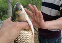 解析秋季野釣常用技巧,把握好今年最後幾次野釣