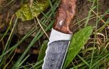 穿越叢林,那些格外迷人的貼身利刃