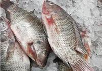 女人吃鯽魚的好處 鯽魚的營養價值