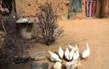 賊娃子偷了70歲大媽3只土雞,她沒報警不罵人,幾句話說的人心疼
