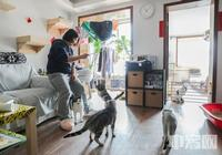 90後姑娘棄高薪工作 與14只貓朝夕為伴