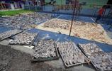 實拍印尼的魚翅加工廠,年產魚翅400噸,場面觸目驚心