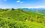 喝了那麼多斯里蘭卡高山紅茶,你知道斯里蘭卡這個國家有多美嗎