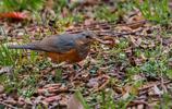 圖蟲人文攝影:最近的一些打鳥成果