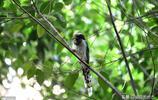 這個小區的居民14年呵護出一片森林,就連紅嘴藍鵲都在小區安了家