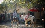 我的旅行日記 遊沙溪古鎮 茶馬古道上唯一倖存的絕美古鎮