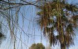 河南開封:金明池邊楊柳綠,三月春風拂面來!好一片湖景春光!