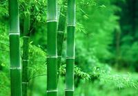 天賦出聯:房前綠竹隨風舞,徵下聯