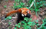 動物圖集:友好的小浣熊
