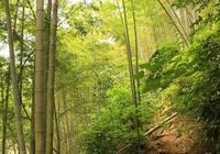 拙聯徵對:綠竹自有三分景