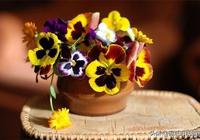 剪紙圖解教程:簡單又有趣的三色堇窗花,讓你愛不釋手