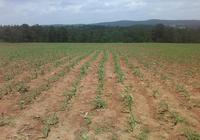 抓好玉米品種試驗 助力畜牧業發展