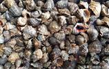 菜市場鮮鮁魚28元一斤 鼓眼魚35 大石蟹60 市民青睞貝類小海鮮