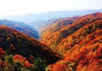 快看,陝西也有一處香山紅葉,不輸北京香山!
