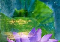花卉攝影:當荷花遇上朝霞,生命將更加絢爛