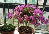 這4種花,不剪長得慢,咔咔剪一刀,長得呼呼快,枝繁葉茂開花多