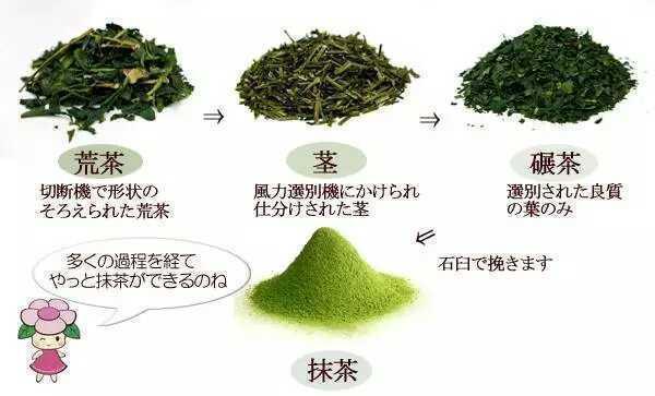抹茶是什麼茶?
