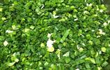 今天已經是臘月11了!13張照片告訴你很有名氣的貴州關嶺豆沙粑!