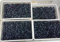 亮眼的藍莓
