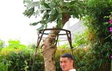 很新奇:第一次見到仙人掌長得像大樹一樣,主幹就有小盆子那麼粗