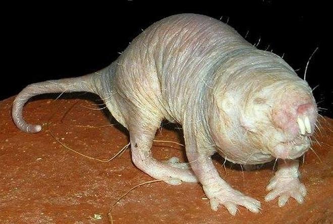 奇怪的哺乳動物!