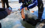 破冰捕魚,一網捕出20多條魚,白魚鯽花活蹦亂跳有20多斤