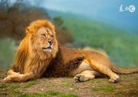 獅子座:晚上精力充沛;獅子座:霸道直接