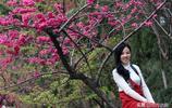 中國最美的5大賞櫻勝地,除了武大,另外4個鮮為人知