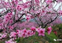 春天,一定不負桃花(詩五首)