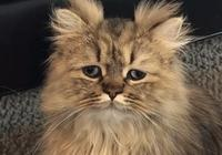 我就是家裡的小公主,美貓魚你喜歡嗎?