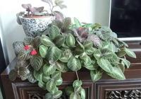 7種不容錯過的室內耐陰盆栽,沒有陽光也能開花