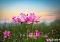 生活如水,人生似茶,守住心底那最美風景,寧靜而致遠